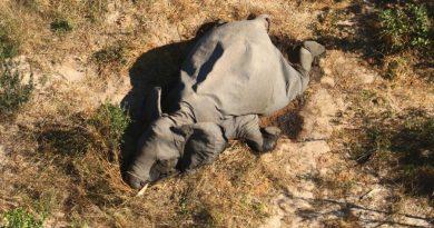 Πώς προέκυψαν οι μαζικοί θάνατοι ελεφάντων στην Αφρική